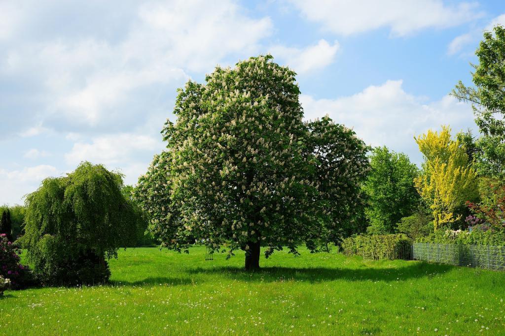 chestnut tree 3390928 1920